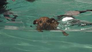 Bibi Swims